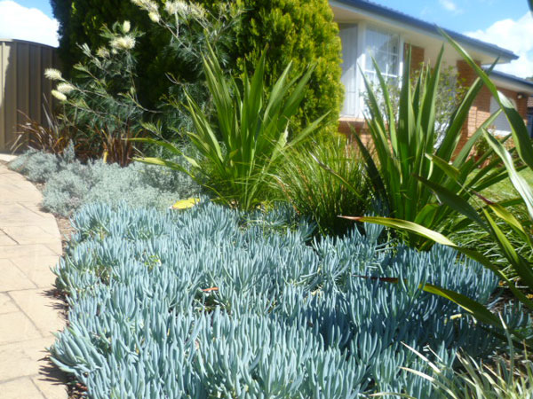 First impressions with entrance front garden design project for Garden designs sydney