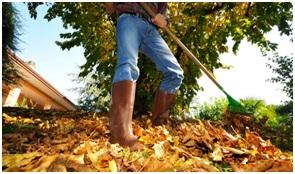 Why Autumn is the Best Time to Landscape Your Garden