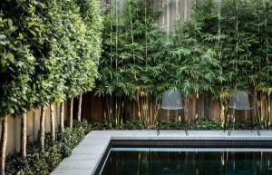 tall-thin-plants-Quick-and-Helpful-Sydney-Landscaping-Tips-to-Make-Your-Small-Backyard-Seem-Bigger-02