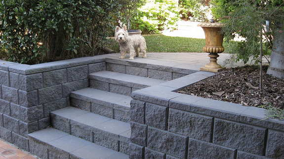 Lawn grass and dogs - landscaping design