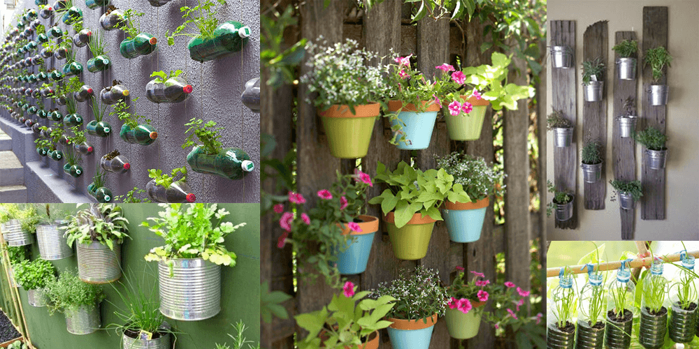 Growing a vertical garden