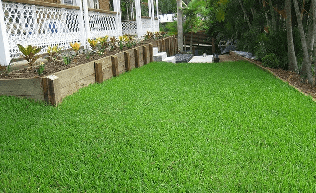 type of grass